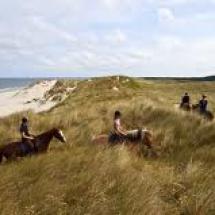 caravan haamstede omgeving duin--paard